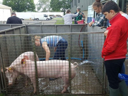 Winning weekend at the Royal Three Counties Show