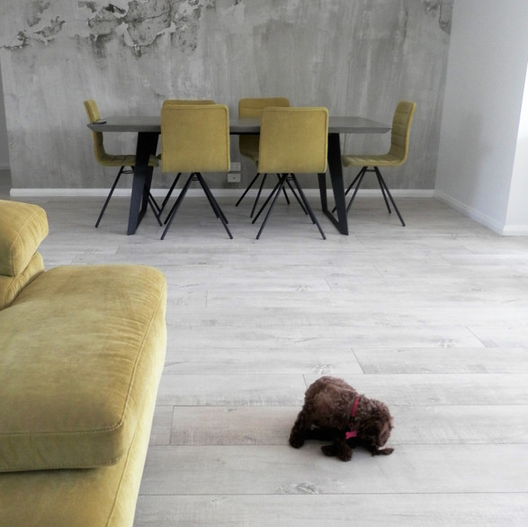 Interior Colour Scheme with Scooter the Puppy, Airport West