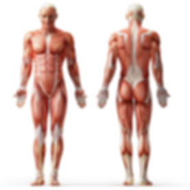 C3VN body parts