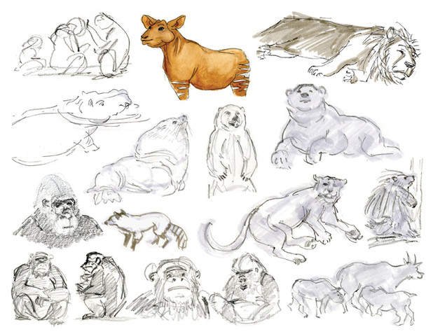 Animal Drawing 2.jpg