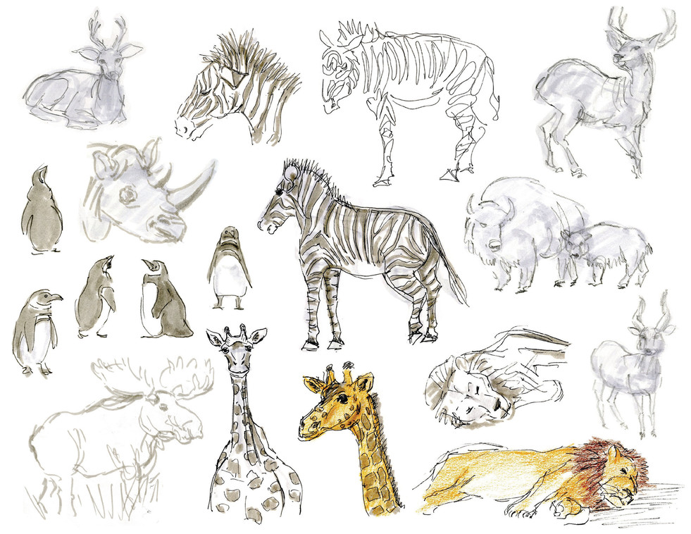 Animal Drawing.jpg