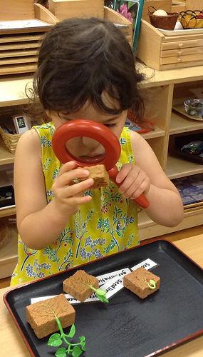 Montessori, Bilingual, Bellevue