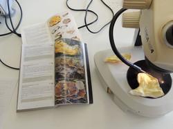 ilust. micológica - aula de lab. II