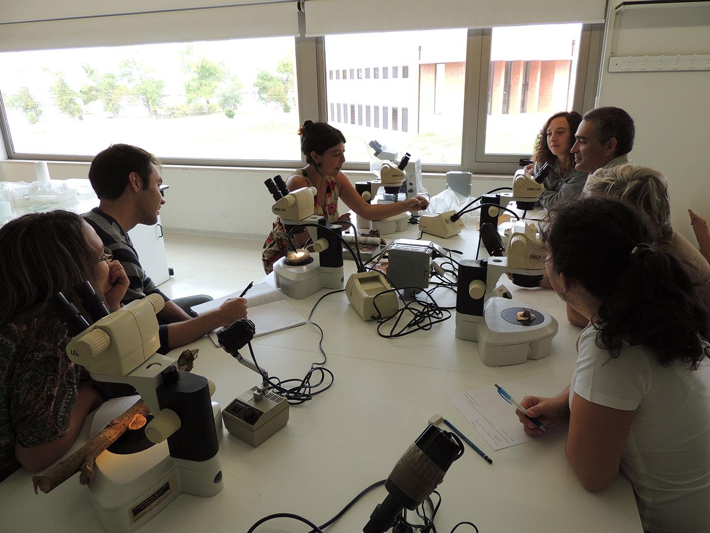 ilust. micológica - aula de lab. I