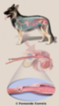 Ilustração científica, Desenho científico, desenho biológico