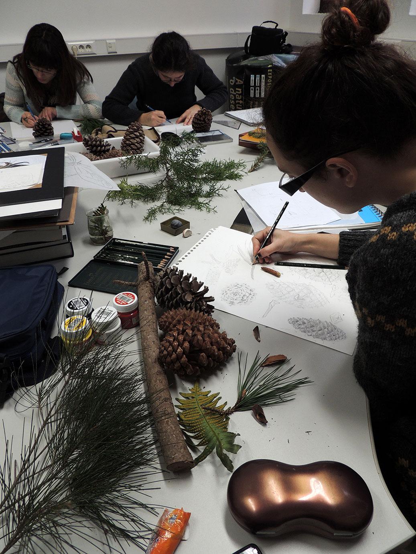 Ilust Botânica - estudos
