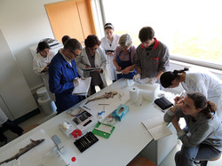 seminários - medições & disseção 1