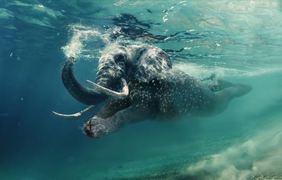 elefan.jpg