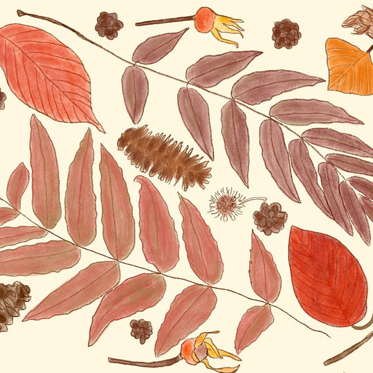 Elements of Fall