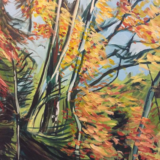 Elk Falls Park, Autumn