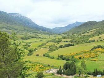 Le plus grand viticulteur bio de France va planter 10.000 arbres en agroforesterie pour sauvegarder