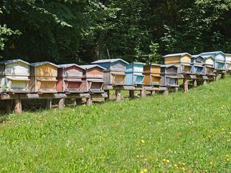 Les ruches mobiles pourront-elles sauver les ours ?