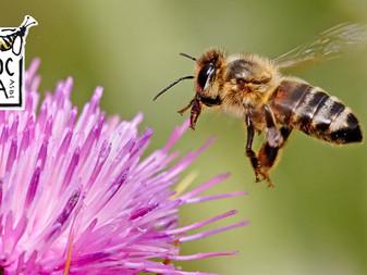12 conseils pour aider les abeilles !