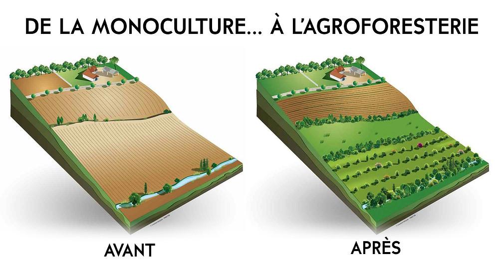 shéma_avant_après_agroforesterie_bio_à_la_une.jpg