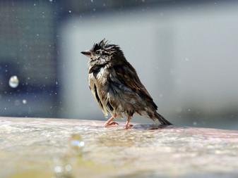 L'Europe a perdu plus de 400 millions d'oiseaux d'espèces communes en 30 ans