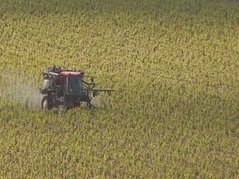 Les vignerons de Champagne bio demandent l'interdiction des herbicides