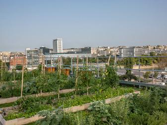 L'énorme potentiel de l'agriculture urbaine
