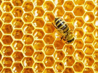 Le miel : un cicatrisant naturel à l'hôpital