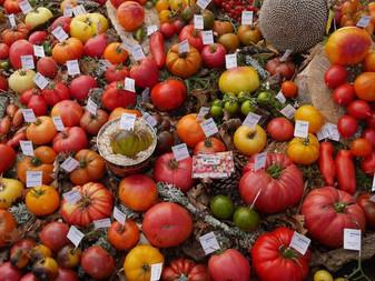 Tomates: l'incroyable collection d'un retraité picard