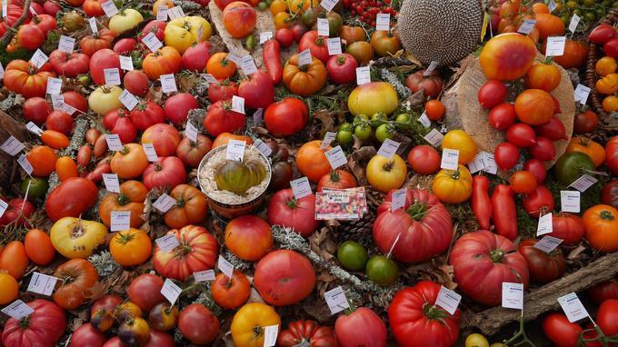 Le week-end dernier, à Bruxelles, lors du Tomato Fest, les Mousquetaires de la tomate ont exposé les fruits de plus d'un millier de variétés différentes issues de leurs collections respectives. Ils seront à la fêtes de plantes de Saint-Jean-de-Beauregard (Essonne), du 21 au 23 septembre prochains.