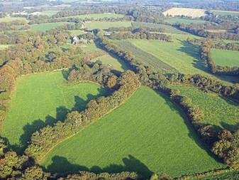 Pollution des sols : la Bretagne restaure son bocage en replantant ses haies