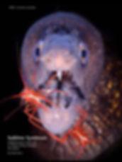 Scuba Diver Australsia