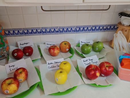 Lower Elementary October 19-23: The Squishy Creatures and a bounty of apples!