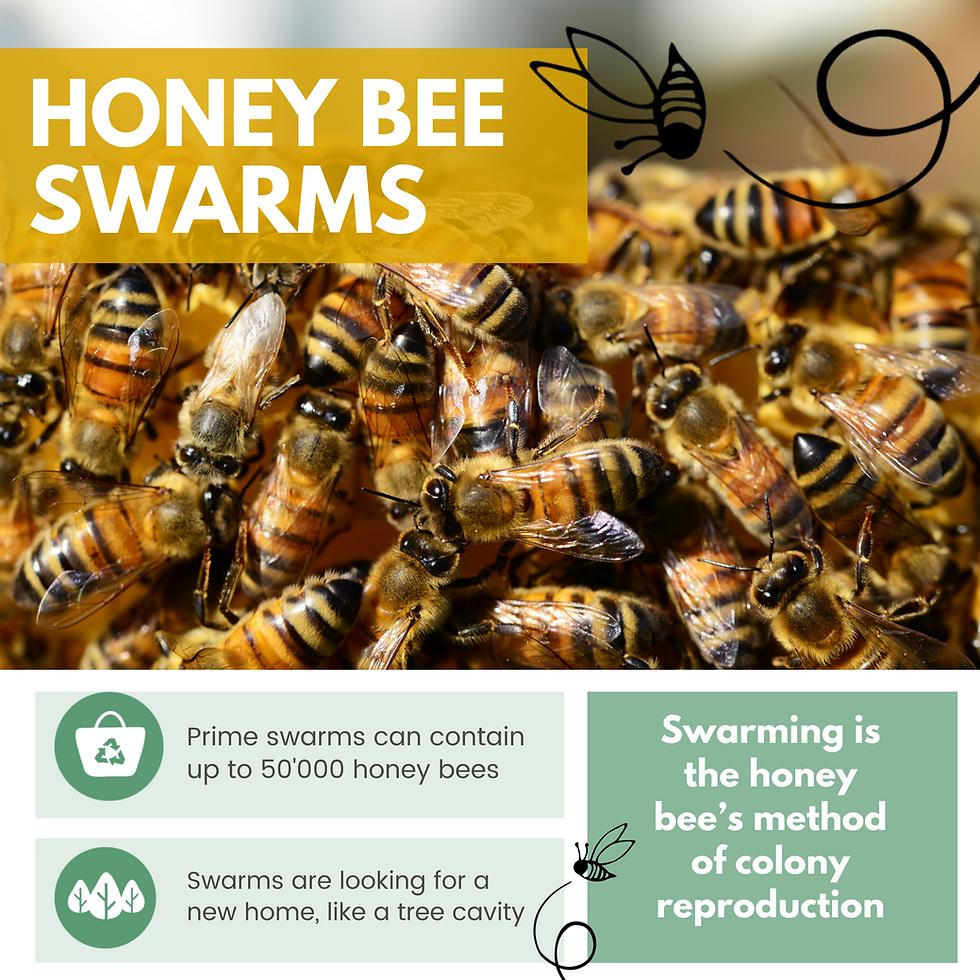 Website Swarms .png