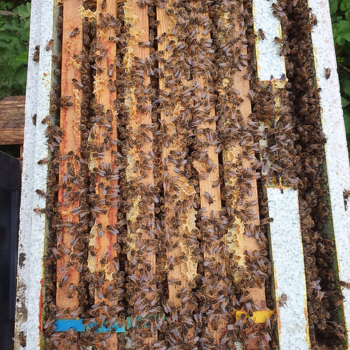 NATIONAL UK NUCLEUS COLONIES FOR SALE WALES BEES