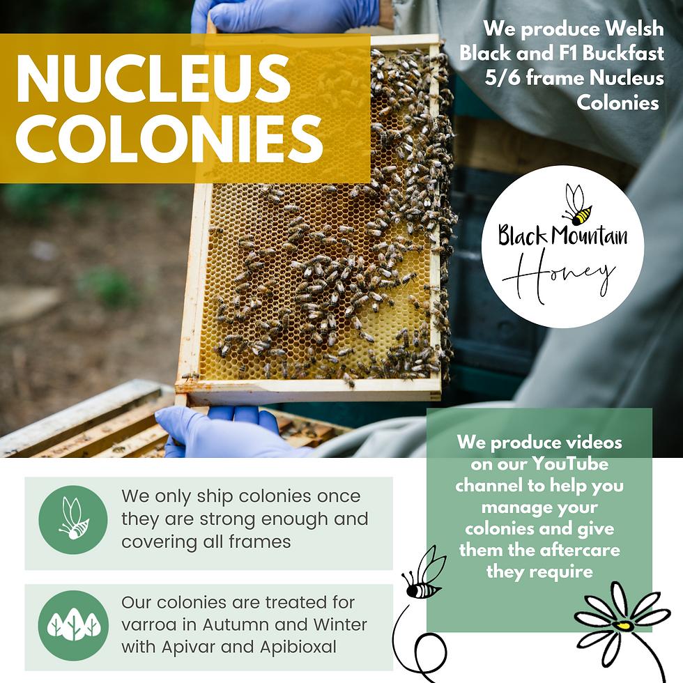 Bee Nucs for Sale UK