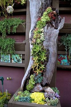 Plantes suculente