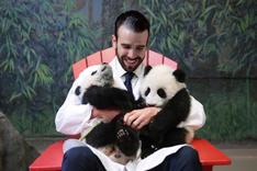 Meeting new panda cubs at Toronto Zoo, 2016