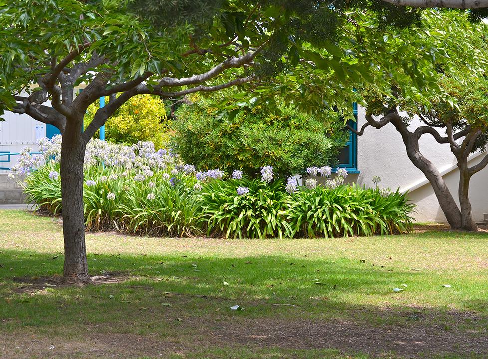 Roosevelt Grass Quad