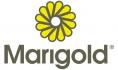 Marigold_logo2_118_70_s