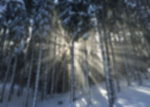 WINTER.FOREST.elisa-coluccia-v8iWQlz5wtc