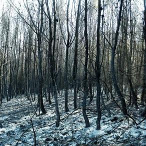 Ξεκίνησε η υλοτόμηση των καμένων δέντρων στην απαλλοτριωμένη ζώνη της λίμνης Μαραθώνα