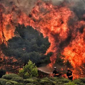 Οι περιβαλλοντικές επιπτώσεις της πυρκαγιάς στο Μάτι Αττικής