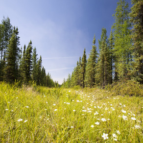 To ΣτΕ ξεκαθαρίζει οριστικά τις μεταρρυθμίσεις για τους δασικούς χάρτες
