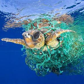 Περισσότερες από τις μισές θαλάσσιες χελώνες παγκοσμίως έχουν φάει πλαστικό