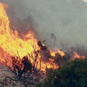 Η μεγάλη απειλή των Ελληνικών δασών