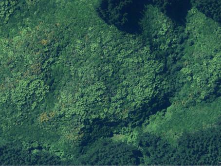 Εξάμηνη παράταση στη διαδικασία υποβολής αντιρρήσεων για τους δασικούς χάρτες
