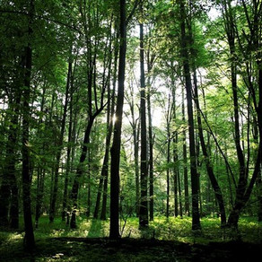 Σχέδιο για τη φύτευση ενός δισεκατομμυρίου δέντρων