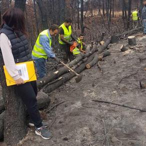 Πάνω από 700 δασεργάτες στις πυρόπληκτες περιοχές της Βόρειας Εύβοιας