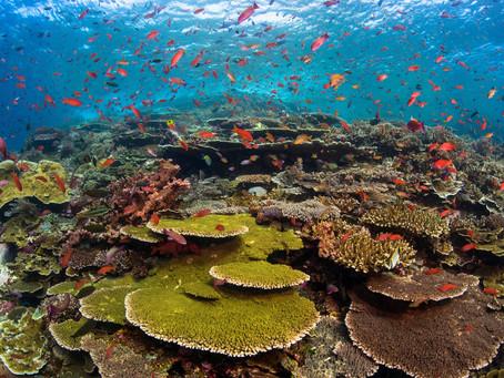 UN draft plan sets 2030 target to avert Earth's sixth mass extinction