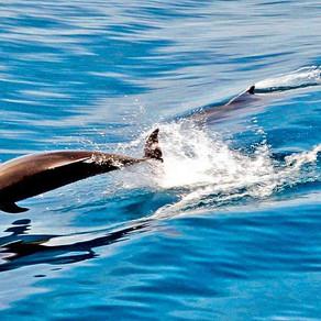 Πλαστικό, «φονιάς» δελφινιών