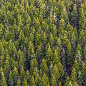 Ξεκινά σήμερα η ανάρτηση των δασικών χαρτών