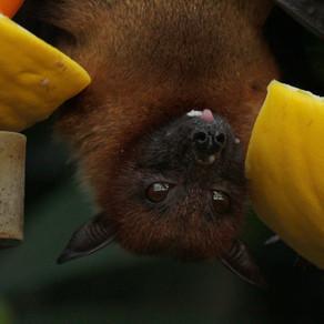 Ποια ζώα μπορούν να μεταδώσουν ιούς σύμφωνα με τον ΠΟΥ;