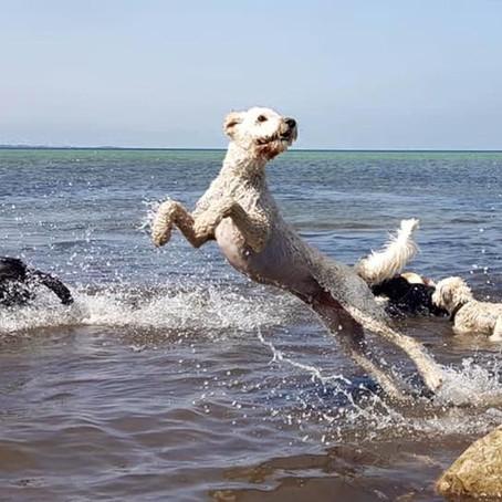 Ta' jer sammen Portugal, og behandl jeres hunde værdigt!
