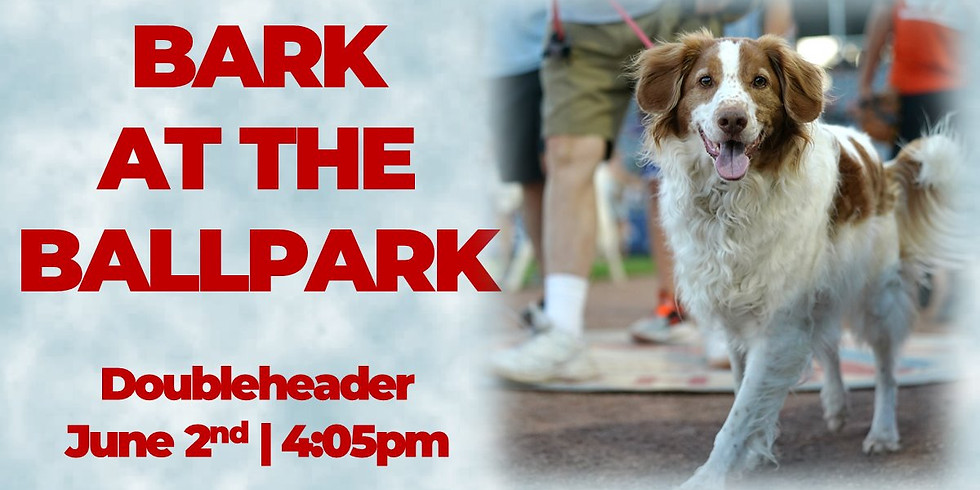 TNT at Bark in the Ballpark with Chicago Dogs!