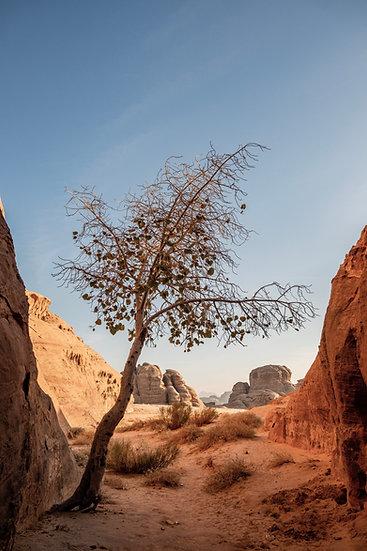Oasis in Wadi Rum